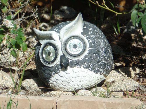 owl big eyes bird