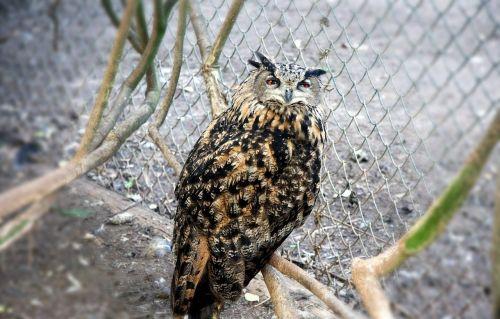 owl barn wild