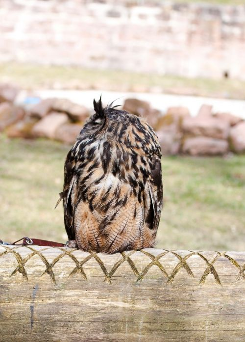 pelėdos,paukštis,plunksna,mielas,Rodyti,zoologijos sodas,laukiniai,parkas