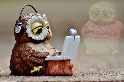 owl miss pregnant