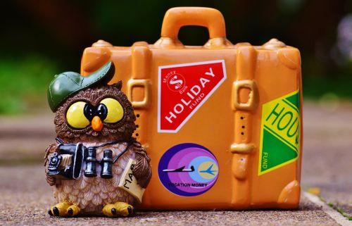 pelėdos,turistinis,žemėlapis,žiūronai,fotoaparatas,kelionė,šventė,linksma,juokinga,figūra,eik šalin,Holdall,gyvūnas,kelyje,bagažas,saldus,atsisveikinimas,mielas,vežimėlis,atostogos