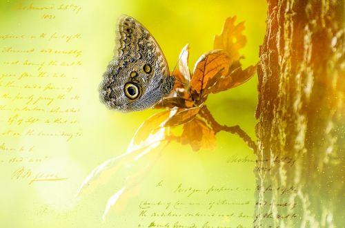owl butterfly butterfly romantic