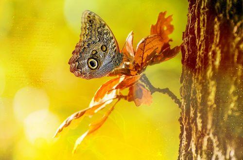 owl butterfly butterfly tree