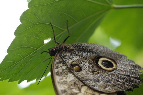 owl butterfly butterfly butterfly house