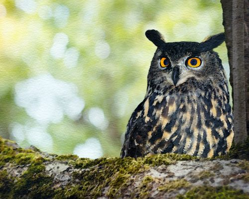 Owl In Woodland Tree