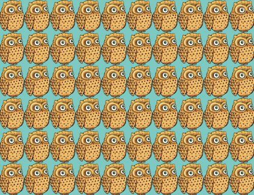owl wallpaper owl wallpaper