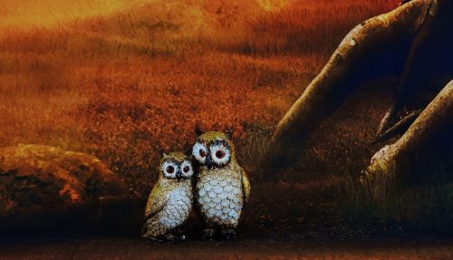 owls pair forest