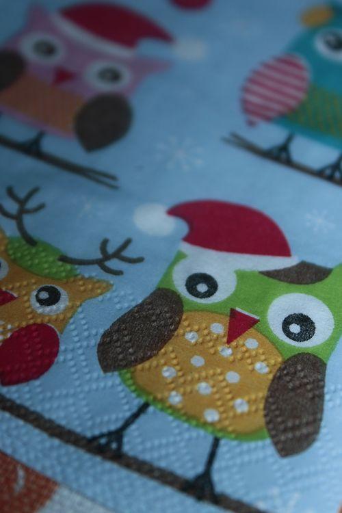 owls sowa bird