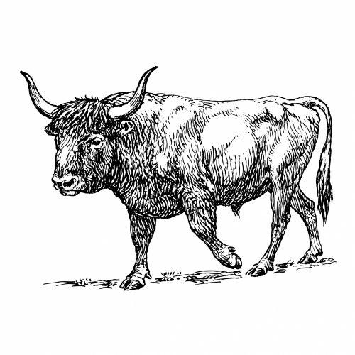 Ox Clipart Illustration