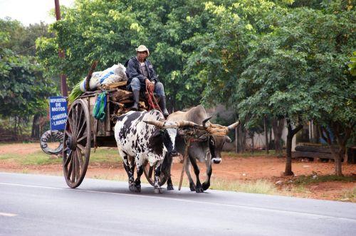 oxcart paraguayans road