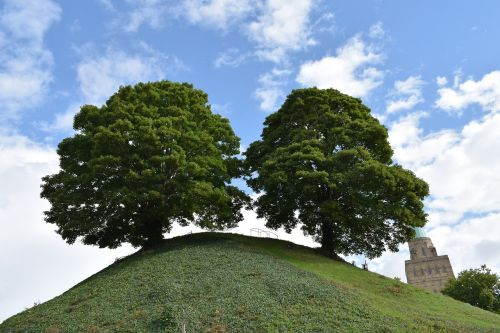 oxford tree sky
