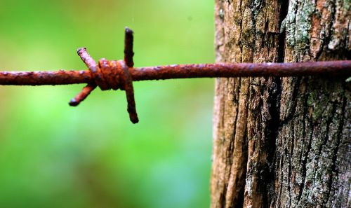 oxide barbed wire wood
