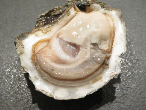 oyster seafood danish
