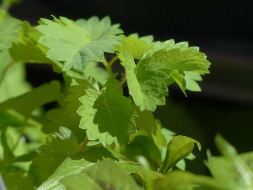 p herb kitchen herb