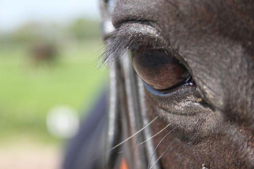 paardenoog horse pony