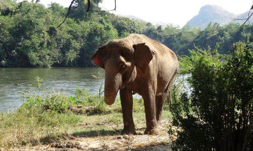 pachyderm elephant national park
