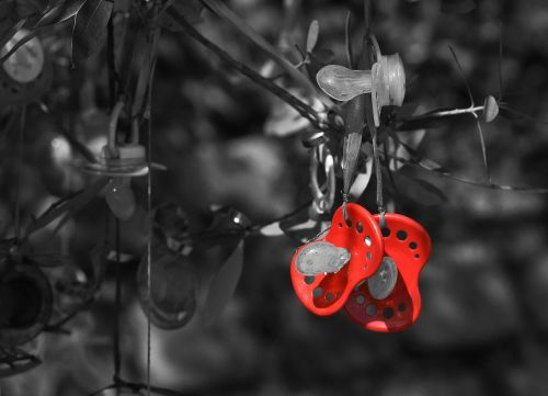 pacifier pacifier tree tradition