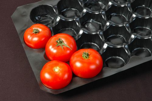 packing tomato food