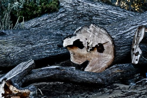 Pacman Tree
