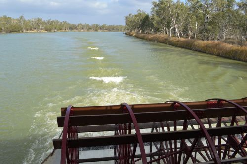 paddle boat murray river paddle
