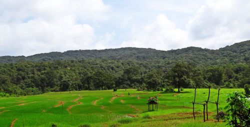 paddy field hills landscape