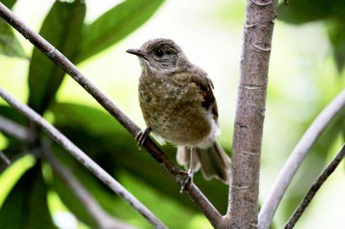 paige bird tropical