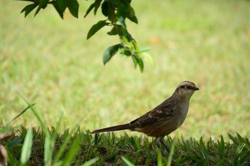 paige nature bird