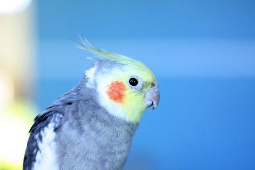 paige birdie bird