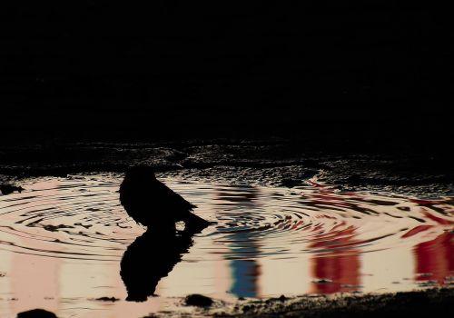 paige pond silhouette