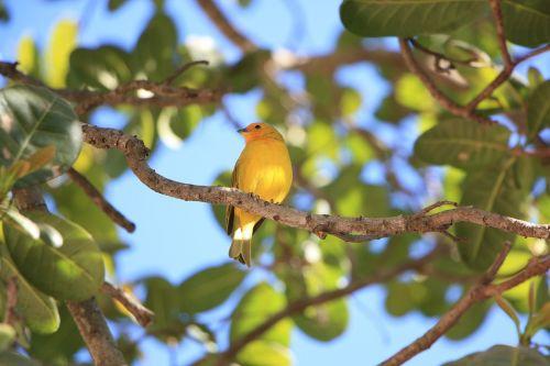 paige yellow bird