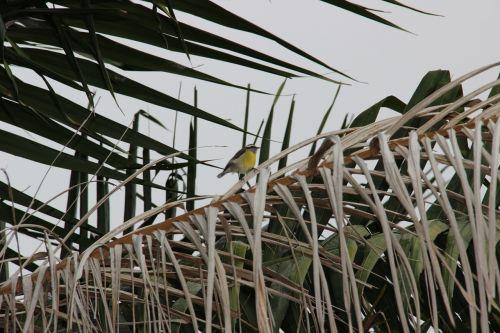 paige nature sparrow
