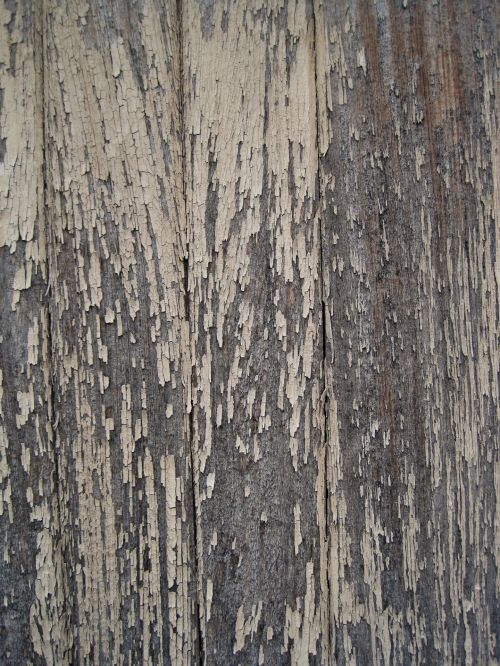 Paint Flaking From Weathered Wood
