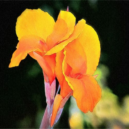 painted lily yellow