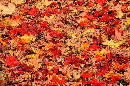 fonas, tapetai, ruduo, kritimas, lapai, lapuočių, dažytos, tapybos, meno, dažytos rudens lapų fone