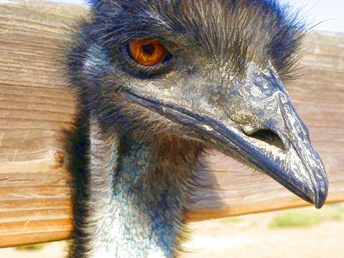 Painted Emu