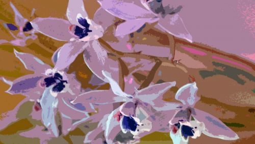 Painted Orchids Background