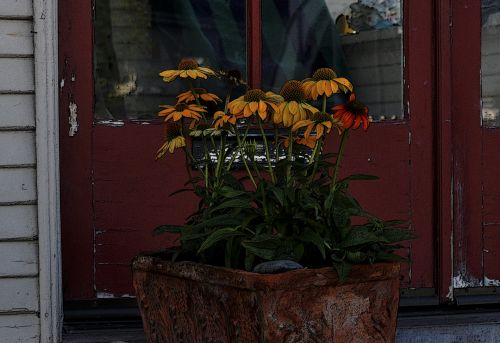 Painted Potted Sunflowers