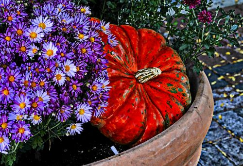 Painted Pumpkin And Mums