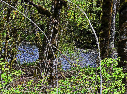 upė, vanduo, srautas, miškas, dažytos, meno, dažytos upės