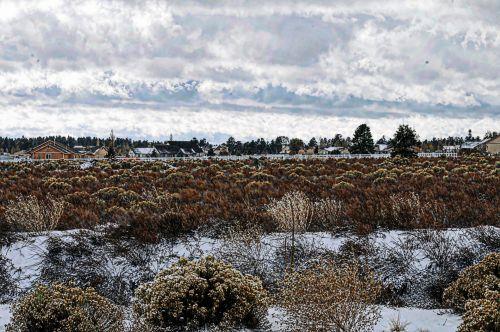 Painted Snowy Landscape