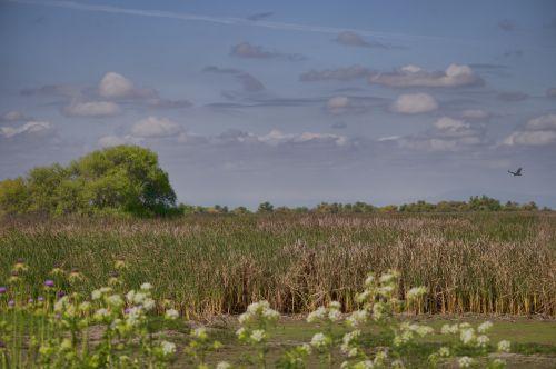 Painted Wetland Landscape