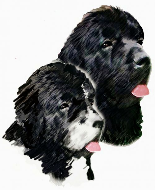 painting dogs newfoundland dogs