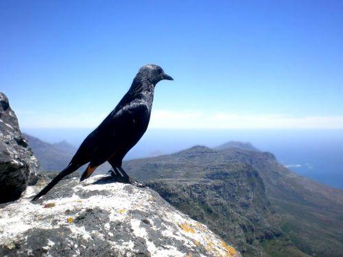 Painting Of Bird On Mountaintop