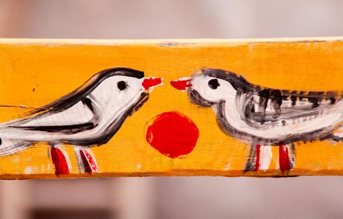pair love birds