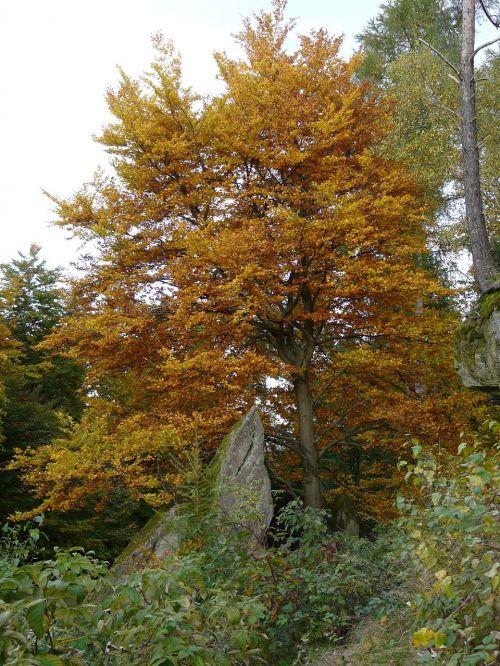 palatinate rock autumn