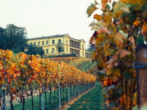 palatinate  vines  castle