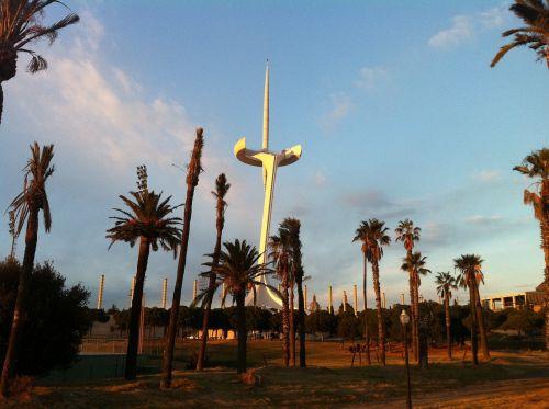 palau sant jordi palm tree montjuic