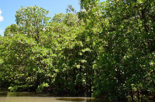 palawan water river