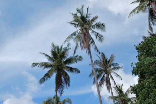 delnas,asija,palmės