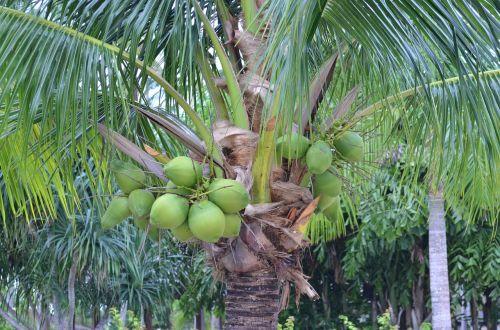 palm palm trees palm tree